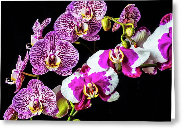 Stunning Orchids Greeting Card