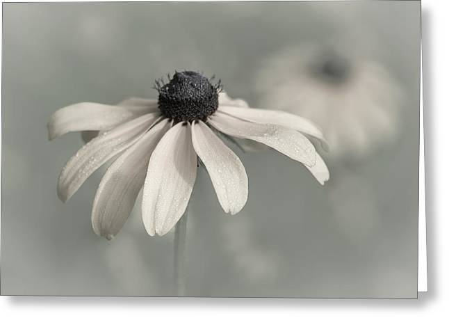 Greeting Card featuring the photograph Subtle Glimpse by Dale Kincaid