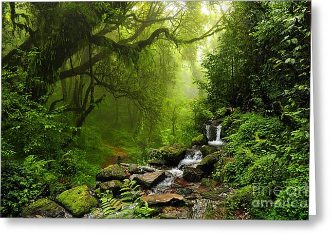 Subtropical Forest In Nepal Greeting Card