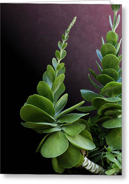 Succulent Spear Greeting Card