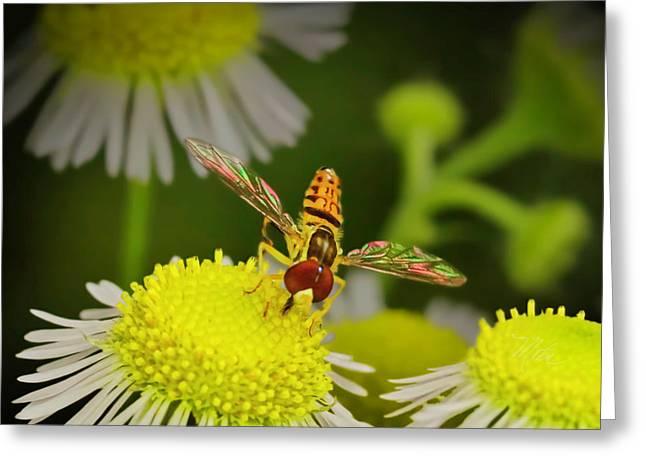 Sugar Bee Wings Greeting Card