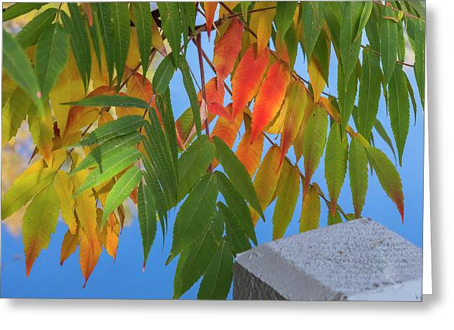 Greeting Card featuring the photograph Sumac by Mark Mille