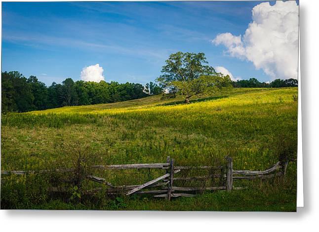 Blue Ridge Parkway - Summer Fields Of Yellow - Lone Tree Greeting Card