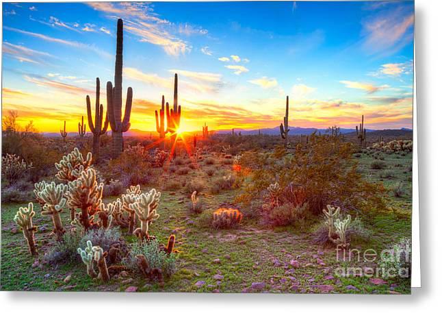 Sun Is Setting Between Saguaros, In Greeting Card