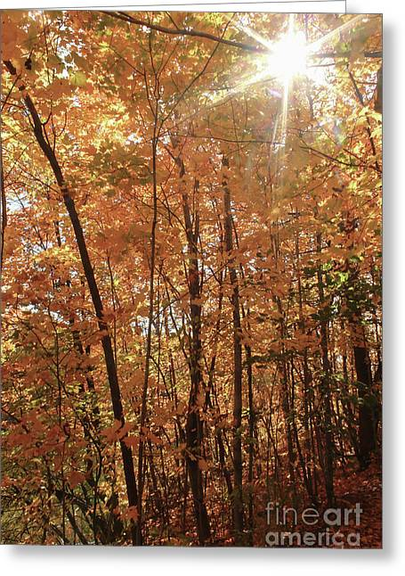 Sunburst Of Fall Greeting Card