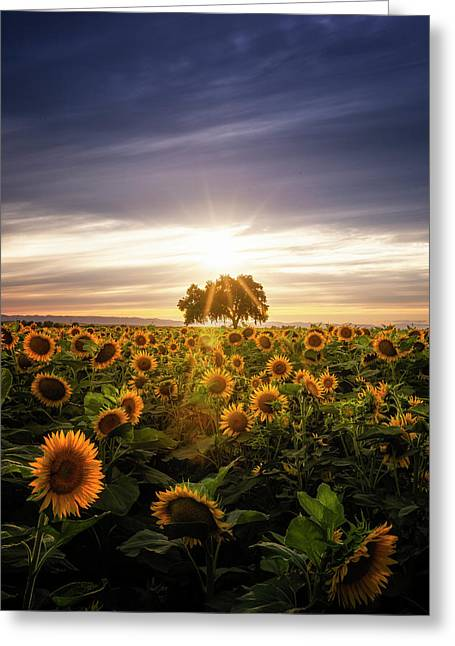 Sunflower Day Greeting Card by Vincent James