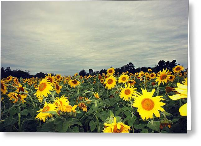 Greeting Card featuring the photograph Sunflower Fields by Candice Trimble