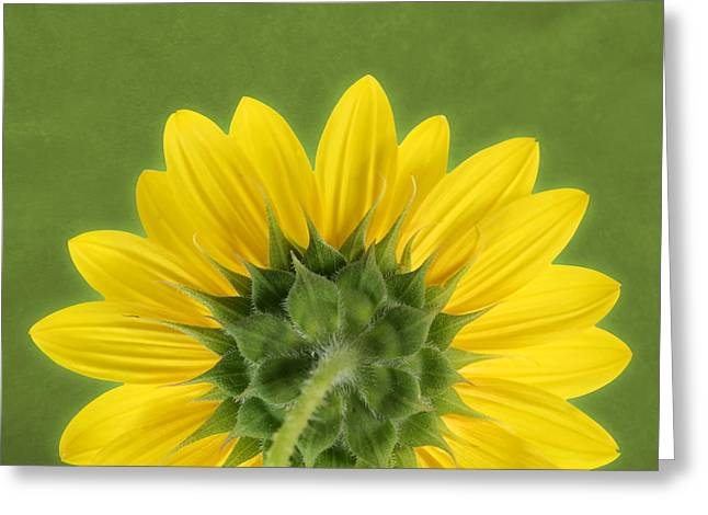 Greeting Card featuring the photograph Sunflower Sunrise - Botanical Art by Debi Dalio