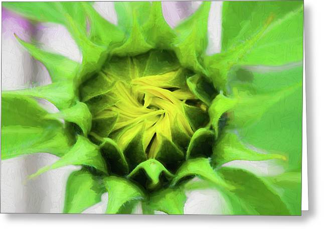 Sunflowers  Helianthus 030 Greeting Card