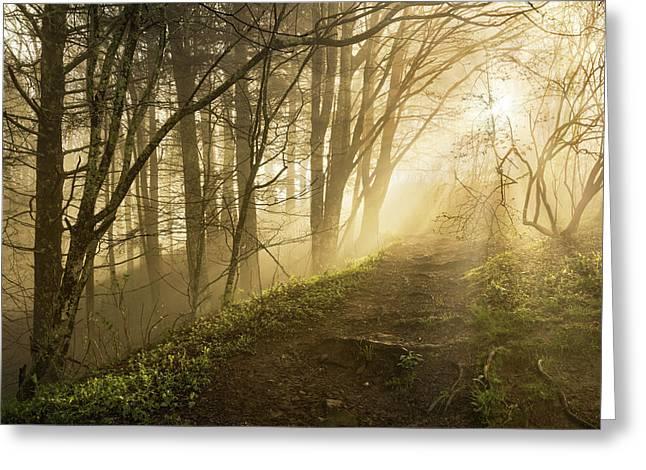 Sunlight Streaming Through Fog Greeting Card by Adam Jones