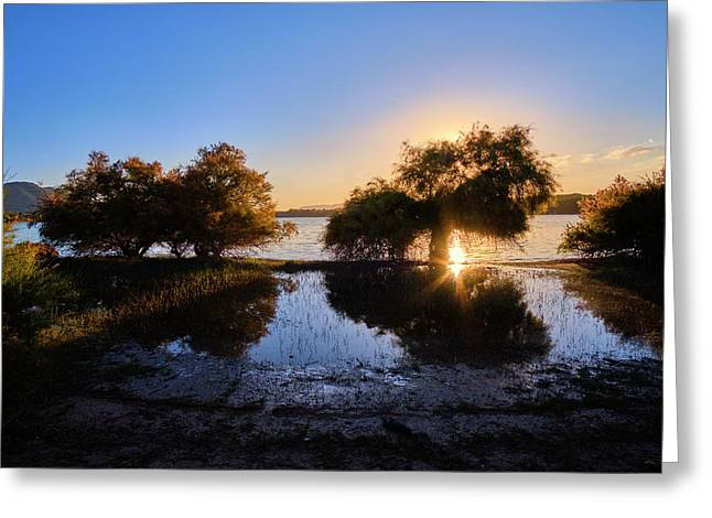 Sunrays Through The Trees. Spring Sunset.  Greeting Card