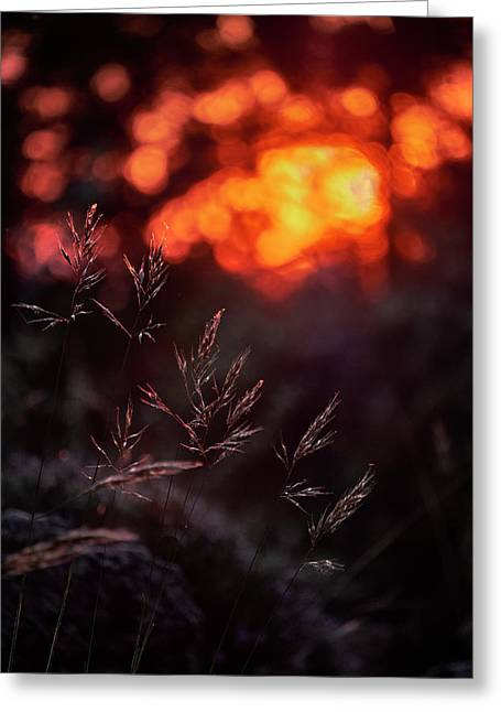 Sunrays Through The Woods Greeting Card