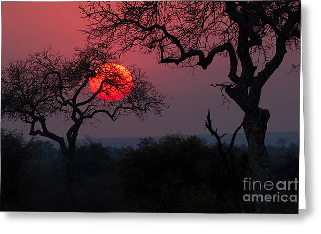 Sunrise In The African Savanna Kruger Greeting Card