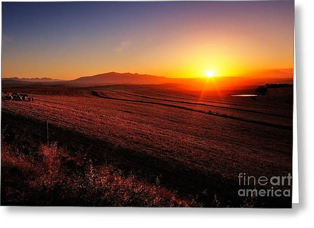 Sunrise Over Cultivated Farmland Cape Greeting Card