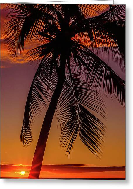 Sunset At The Palm Greeting Card