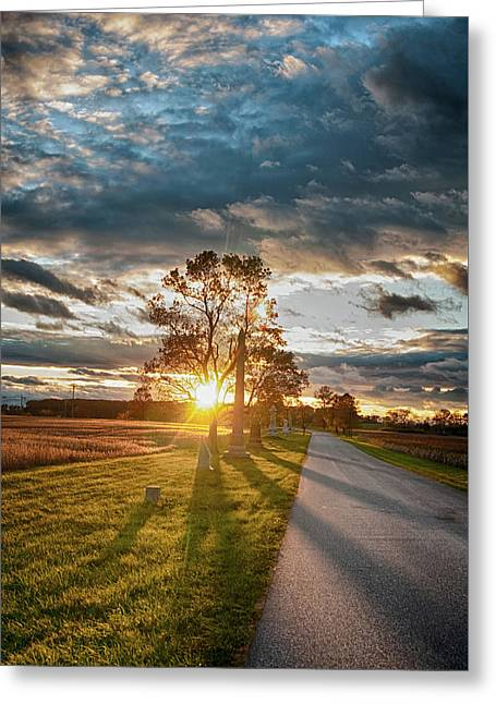Sunset In The Tree Greeting Card