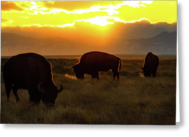 Sunset On The Plains Of Colorado Greeting Card