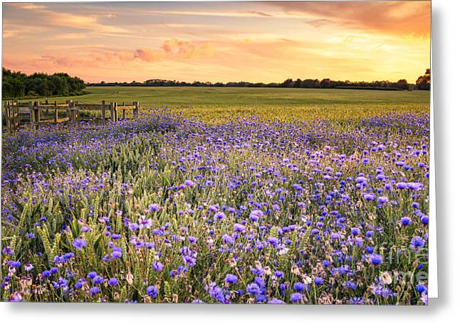 Sunset Over A Wild Flowers In Cornwall Greeting Card