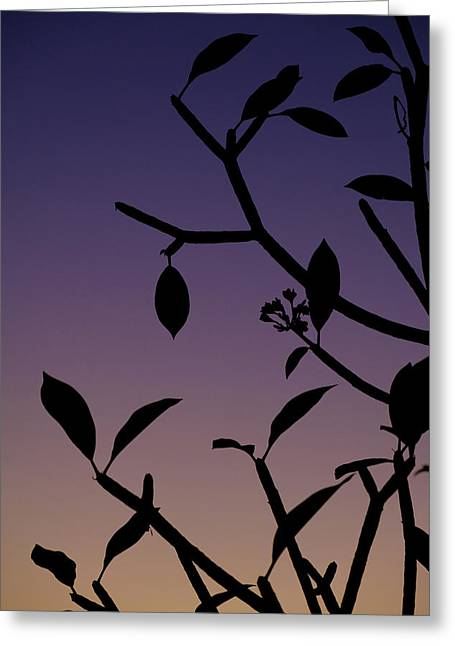 Greeting Card featuring the photograph Sunset Silhouette by Nicole Young