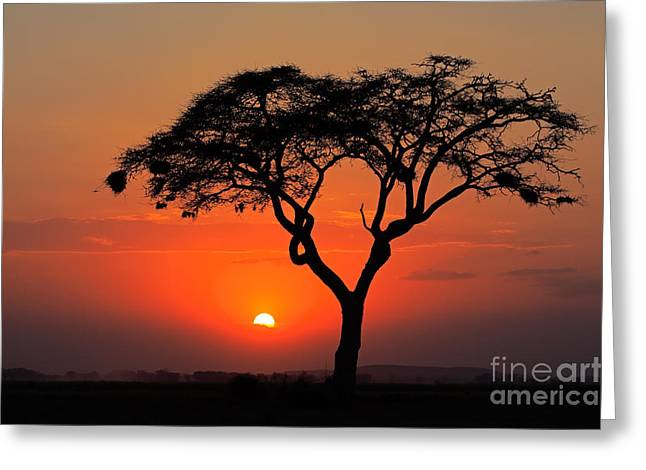 Sunset With Silhouetted African Acacia Greeting Card
