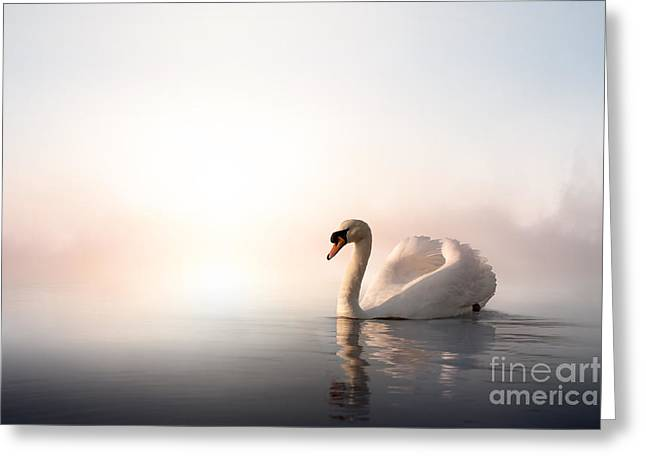 Swan Floating On The Water At Sunrise Greeting Card