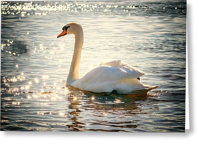 Swan On Golden Waters Greeting Card