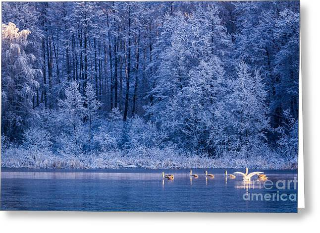 Swans At Sunrise On Winter Lake Greeting Card