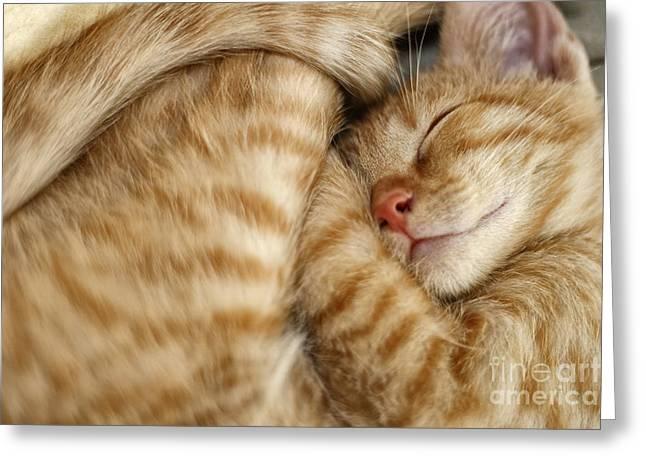 Sweet Dreams, Sleeping Cat Greeting Card