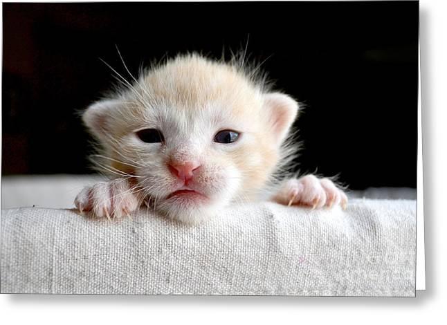 Sweet Newborn Orange Tabby Kitten Greeting Card
