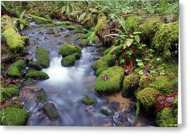 Greeting Card featuring the photograph Sweet Sounds At The Creek by Ben Upham
