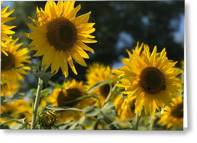 Sweet Sunflowers Greeting Card