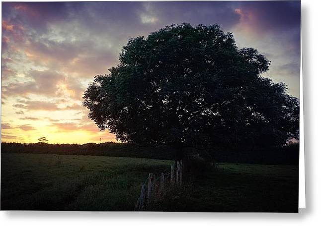 Symme Tree Sunrise Greeting Card