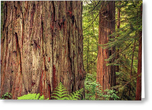 Tallest Living Things On Earth Greeting Card