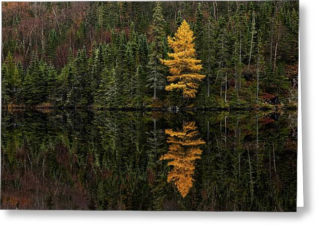 Tamarack Defiance Greeting Card