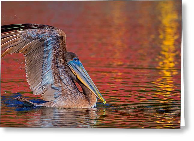 Tchefuncte Pelican Greeting Card
