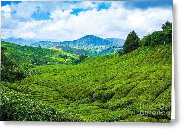 Tea Plantation In Cameron Highlands At Greeting Card