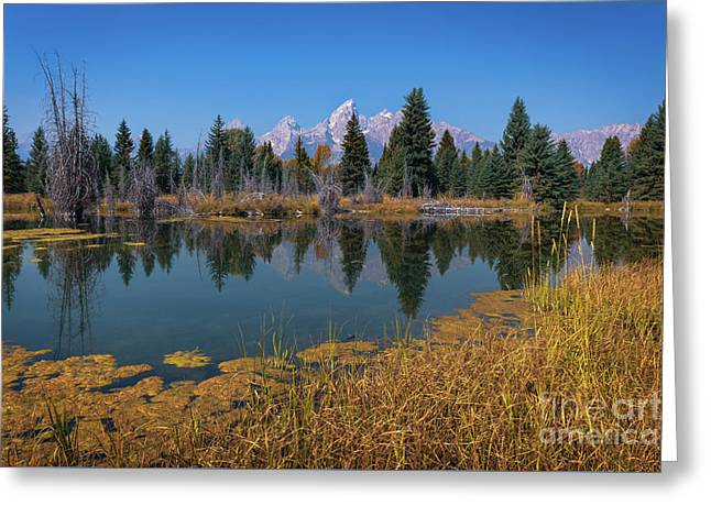 Tetons Majesty Greeting Card