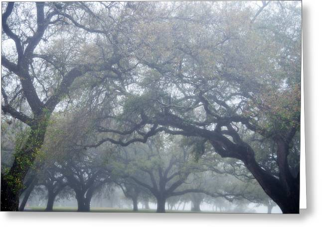 Texas Live Oaks In Fog Greeting Card