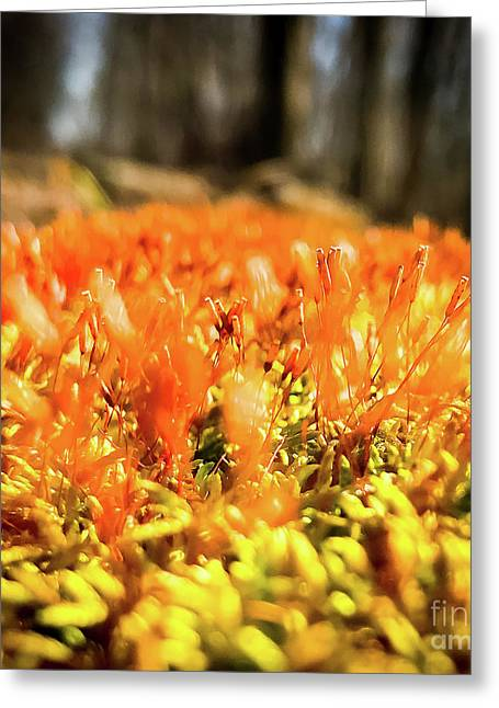 Greeting Card featuring the photograph Orange Moss 1 by Atousa Raissyan