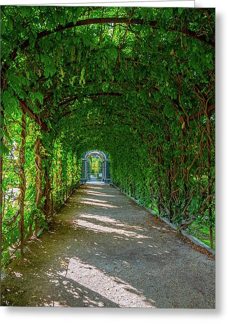 The Alley Of The Ivy Greeting Card