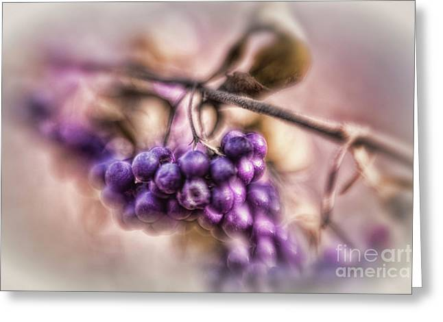 The American Beautyberry Greeting Card
