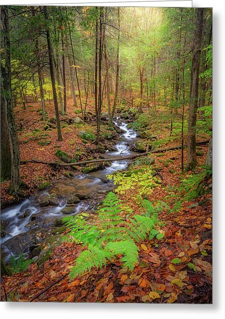 Greeting Card featuring the photograph The Autumn Forest by Bill Wakeley