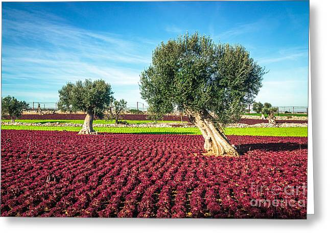 The Beautiful And Colorful Landscapes Greeting Card by Sabino Parente