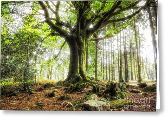 The Beech Of Ponthus And Sidoine Greeting Card