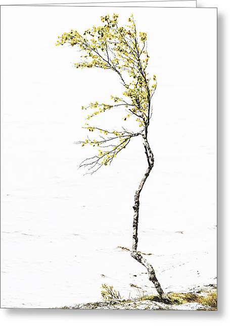 The Birch Tree Greeting Card