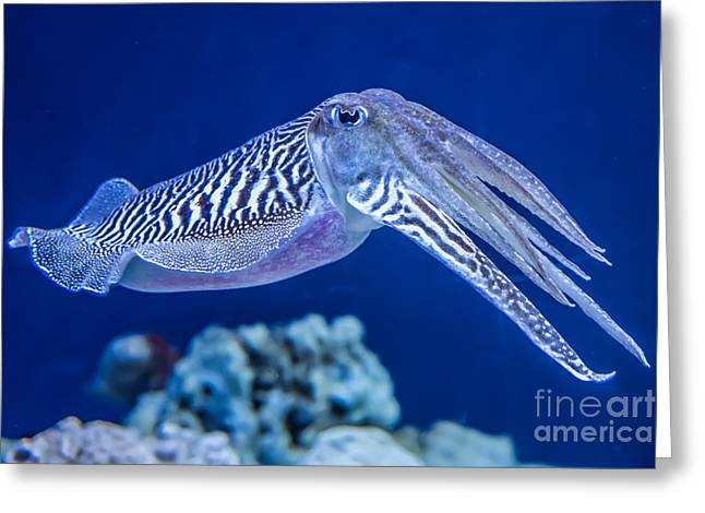 The Common European Cuttlefish Sepia Greeting Card