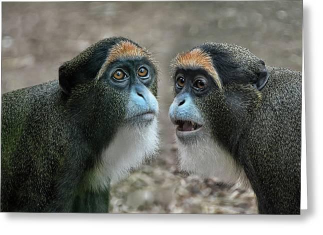 the De Brazza's monkeys Greeting Card