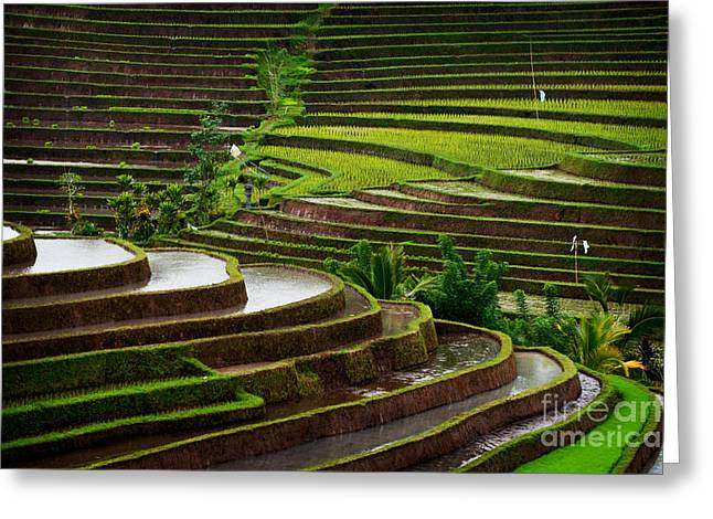 The Dramatic And Graphic Rice Terraces Greeting Card