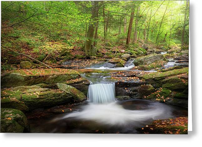 Greeting Card featuring the photograph The Ethereal Forest 2 by Bill Wakeley