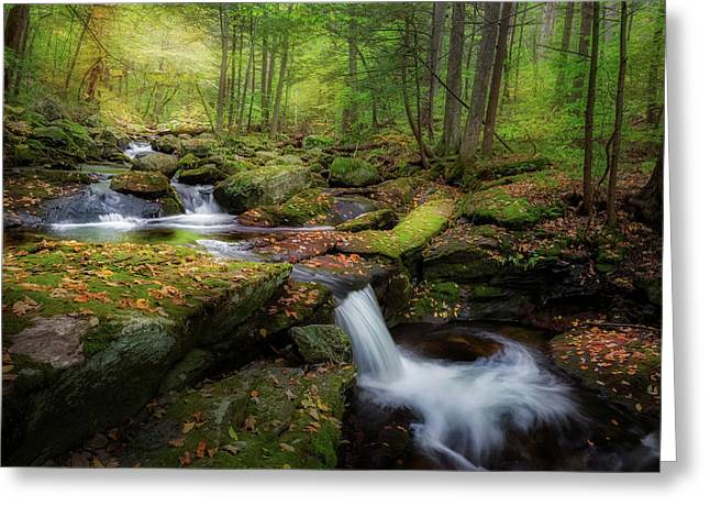 Greeting Card featuring the photograph The Ethereal Forest by Bill Wakeley